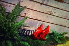 The Ruby Slippers TV Shot (Walker Dukes) Tags: color film beauty television canon tv screenshot glamour hollywood movies filmstill filmstills adrian wizardofoz mgm diva tcm coolest toto 1939 moviestills rubyslippers moviestill thewizardofoz judygarland tvshot turnerclassicmovies moviestars tvshots colorfilm billieburke oldmovies margarethamilton picturesofthetelevision framecapture xti canonxti televisionshot flickrglam colormovies colorfilms therubyslippers ysplix