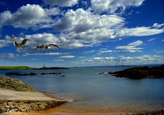 Late arrival (Nicolas Valentin) Tags: blue sky mer lighthouse bird clouds scotland scenery rocks gull northsea eastcoast elie flickrsbest mywinners abigfave aplusphoto