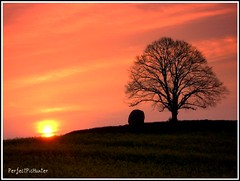 Stone and Tree (PerfectPicHunter (Germany)) Tags: trees light sunset shadow sun tree nature silhouette rural sunrise germany landscape deutschland licht sonnenuntergang stones natur felder casio pointofview dreams fields landschaft sonne sonnenuntergnge bume sonnenaufgang schatten exilim frhling landschaften mecklenburg deciduoustrees mecklenburgvorpommern schwerin norddeutschland zart naturesfinest blueribbonwinner lndlich deciduoustree sonnenaufgnge flickrsbest gunnars worldbest landschaftsfotos platinumphoto laubbume impressedbeauty ourplanet einzelbume superbmasterpiece treesubject awesometrees ysplix flickrphotoaward landschaftsfoto solitrbume perfectpichunter pichuntergroup landscapesdreams coolgermany qemdfinchfavforjanuary2008 landscapesofvillagesandfields avision spiritofphotography photorater e2image grosstieten goldolivebranch deutschlandfotos e2image spectacularsunsetsandsunrises