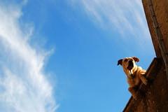 soando gatos (dreaming cats) (Corto Maltes) Tags: sky cloud dog clouds village cloudy pueblo gatos dreaming perro gato cielo nubes pensativo dreamy nublado nube soando soador