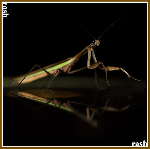 mantis005.jpg