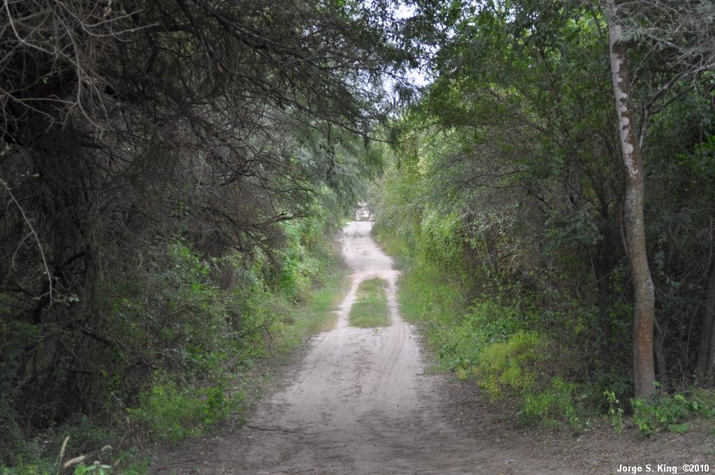 Caminito de monte