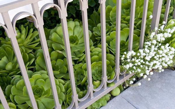 Newport Beach Succulents