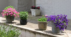 Container plants: still alive!