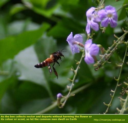 buzzzzzzzzy bee