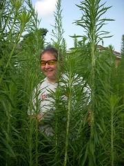 me in weeds