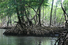 Mangroven @ National Park near Samana
