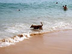 愛玩水的狗