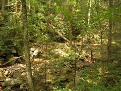 Daniel Ridge trail.JPG