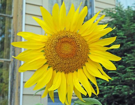 Photo-A-Day #873b 08/29/07