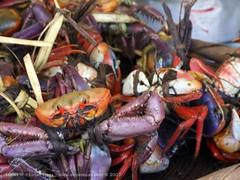Los punches (ETicas) Tags: naturaleza nature photo crab finepix fujifilm elsalvador s9500 gomez cangrejos punches gómez s9000 naturephoto jiquilisco elpulgarcitodeamerica eticas elmerticas ucidesoccidentalis cangrejosdemar gómezticas fotografíadelanaturaleza