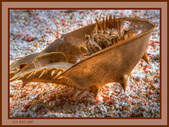 Washed Ashore (KayCpics) Tags: beach nature sand crab hdr horseshoecrab wonderworld blueribbonwinner worldbest shieldofexcellence colorphotoaward superbmasterpiece kaycpics