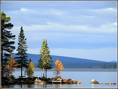 Trees in September (Jom Manilat) Tags: autumn trees lake water sweden lappland september lapland naturesfinest norrbotten storavan