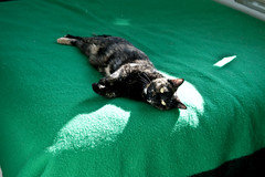 -- (felix.castor) Tags: nyc sun sunlight cat spring may saturday ev blanket basking amlia writhing 051510