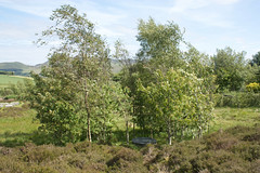 Lochan Eck Garden (Cthonus) Tags: garden geotagged pentlands pentlandhills lanarkshire ianhamiltonfinlay littlesparta whitehill southlanarkshire efs1855mmf3556is lochaneck lochaneckgarden windlestrawtop
