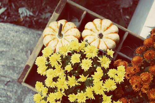 pumpkins, mums