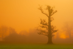 Sodium Cloud Forest, Rickmansworth (flatworldsedge) Tags: longexposure orange cloud mist green silhouette fog night forest gold glow wb fluorescent moonlight late sodium unexpected streelight whitebalance chemical thicket rickmansworth aquadrome explored yahoo:yourpictures=myautumn