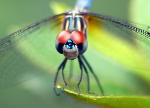 Dragonfly II