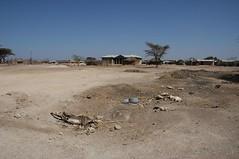 184 - Kalacha - The Drought (FO Travel) Tags: kenya nairobi nakuru karama lewa baringo naivasha turkana gabra chalbi suguta nariokotome kalacha loyangalani logipi