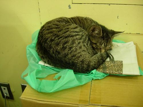 Bodega Cat on 8th Street