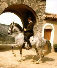 Copy of Phillipe Karl (DressageReine) Tags: horse karl srs phillipe piaffe
