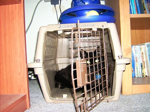 Fusion in Kennel