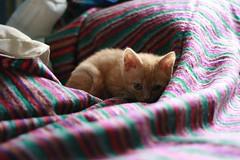 kitty (Adam Greig) Tags: kitten kitty zeb