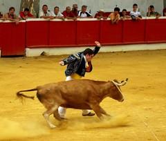 Sous le signe de la vache