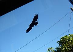 Newly freed eagle - close-up (liquidnight) Tags: seattle streetart bird eagle stickers decal communityart ephemeralart windowzoo