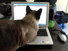 Cyber cat again! (Happy happy! Joy joy!) Tags: love kitten angeles lol kitty kit mah excapture camb