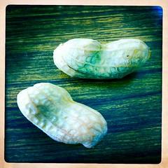 Giant P Nutz (PoPBunka! 英会話 浜松市) Tags: japan peanuts peanut iphone iphone4 hipstamatic popbunka