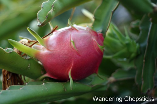 How to Eat Dragon Fruit 2