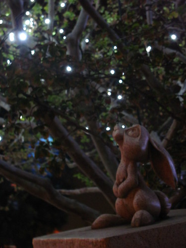 Sleeping Beauty Rabbit looking at the lights...