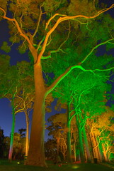 Ghost Gums (The Grateful Dad) Tags: contest australia brightlights kingspark spookey supershot colorphotoaward auselite ghostgumtrees