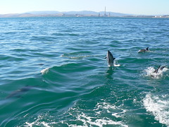 Dolphins by the oil refinery (amateur_photo_bore) Tags: school sea coast spain pod mediterranean screensaver dolphin espana dolphins oil coastline refinery pods delfines algecirasbay bahadealgeciras flickrsbest gibraltarbay bayofalgeciras