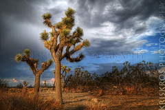 father and son (Kris Kros) Tags: california ca sky usa cloud storm tree public cali photography la us losangeles high highway pix desert dynamic joshua father joshuatree son bluesky hwy socal kris through fatherandson range graysky hdr palmdale kkg photomatix kros kriskros 5xp kk2k infinestyle pearlblossom kkgallery