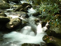 (Missy Gulley) Tags: mountains nature water creek waterfall stream hiking greatsmokymountains greenbrier porterscreek porterscreektrail fernbranchfalls