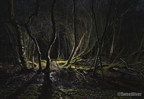 Swamp-1-2008