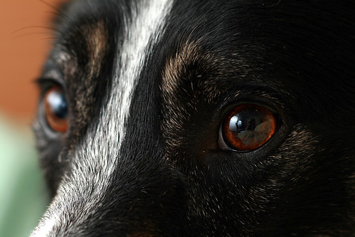 Misty's eye
