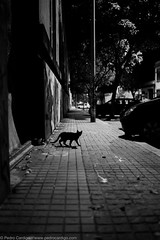 rumbling in the night (Pedro Cardigo) Tags: street leica bw night cat voigtlander porto nokton matosinhos f12 m9