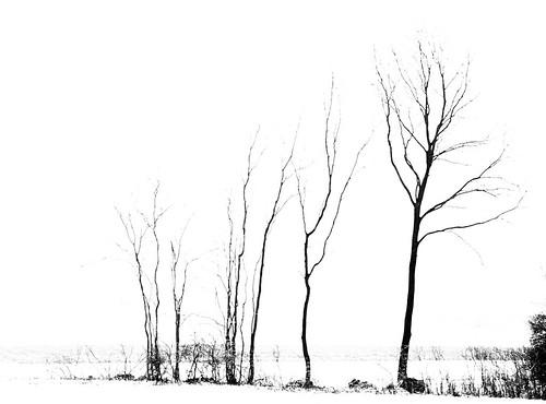 Branching 25287.jpg