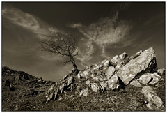 Against all odds III (jasontheaker) Tags: uk winter tree texture water rock sepia spring wind lakes sunny cumbria coniston eroded landscapephotography jasontheaker limestonehawthorne lakedistrict oldman sigma1020
