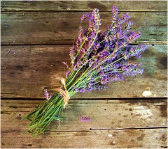Lavanda (ManonManon) Tags: summer flower texture colors beautiful composition wonderful pretty excellent simple decor soe lavanda anawesomeshot aplusphoto