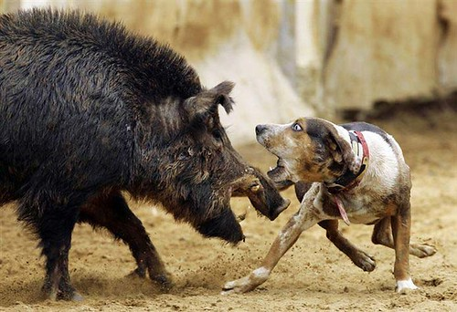 763907279 cd5ffb6880 Funniest Animals