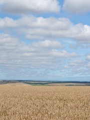 Corn and Clouds - by the noggin_nogged