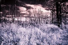 IMG_6116 (secondaryreality) Tags: longexposure nature landscape meadows infrared longmeadow r72 canonefs1022mmf3545usm 14mm eos30d