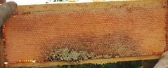 Beekeeping 2474