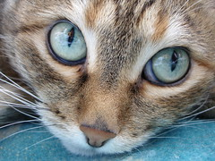 Astonished (olische) Tags: portrait macro cute cat nose eyes soe astonished supershot duska shieldofexcellence diamondclassphotographer flickrdiamond