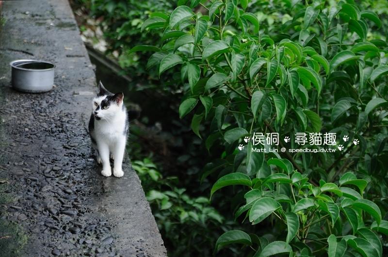 DSC_4663_01.JPG