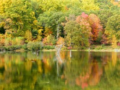 Fall Green (Stanley Zimny (Thank You for 18 Million views)) Tags: park autumn trees lake reflection tree green fall nature water colors leaves automne catchycolors leaf colorful colours seasons natural fallcolors herbst autumncolors fourseasons autunno autumnal colorexplosion 4seasons sgis jesien jesiennie